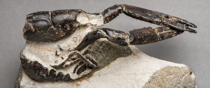 Лобстер возрастом 110 млн. лет,  современник динозавров Лобстер, Динозавры, Нижний мел, Мезозой, Верхний мел, Морские лилии, Длиннопост