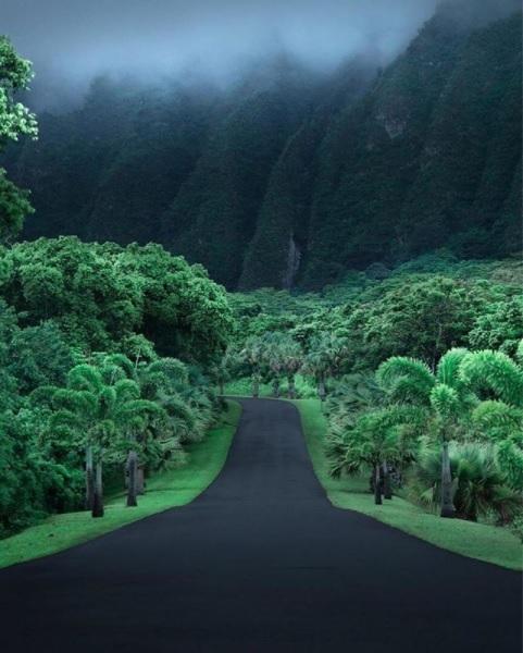 Гавайи Гавайи, Природа, Пальмы, Красота, Фото природа