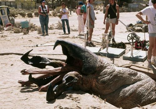Дрожь земли Ностальгия, Фильмы 90-х, Фильмы ужасов, Фильмы, Видео, Длиннопост