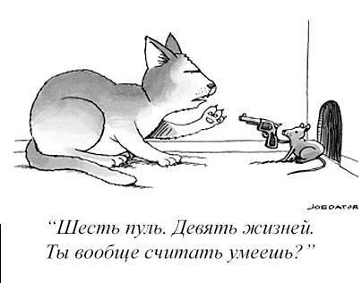 Кошачья арифметика