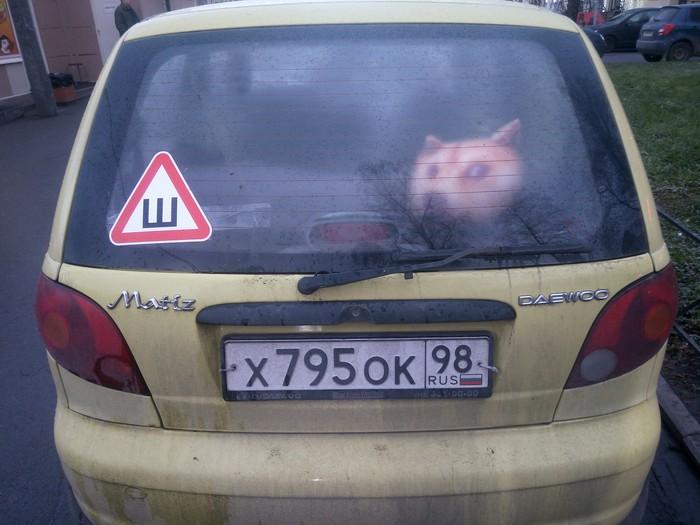 Оно уже здесь... Интернет, Мемы, Санкт-Петербург, Машина, Игрушки, Собака