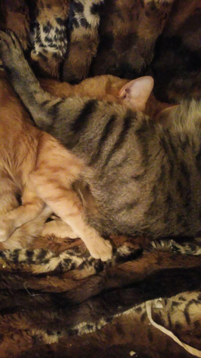Мне и так норм. Три кота, три хвоста. Кот, Не такой как все, Сон, Групповой секс, Клубничка, Длиннопост