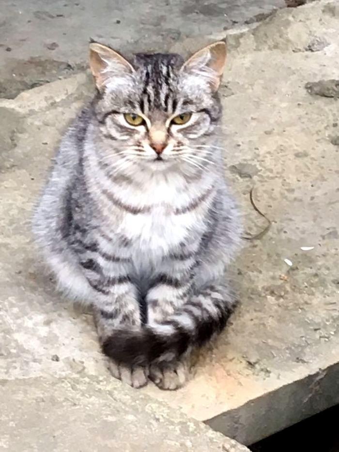 Взял не своё, но сделал хорошо. Кот, Бродячие коты, Солнечный зайчик, Доброта, Длиннопост, Фотография, Пятница