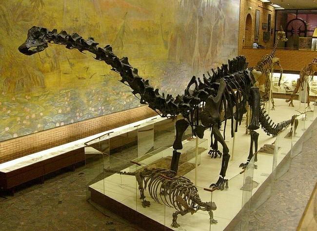Диплодок - гигант юрского периода Диплодок, Юрский период, Палеонтология, Доисторические животные, Длиннопост