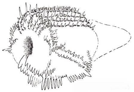 Челюсти неведомых существ для нужд нефтяной отрасли Палеонтология, Конодонт, Длиннопост