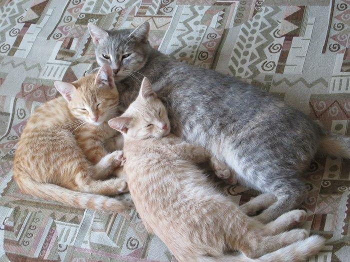 Семья сонных котиков ^^
