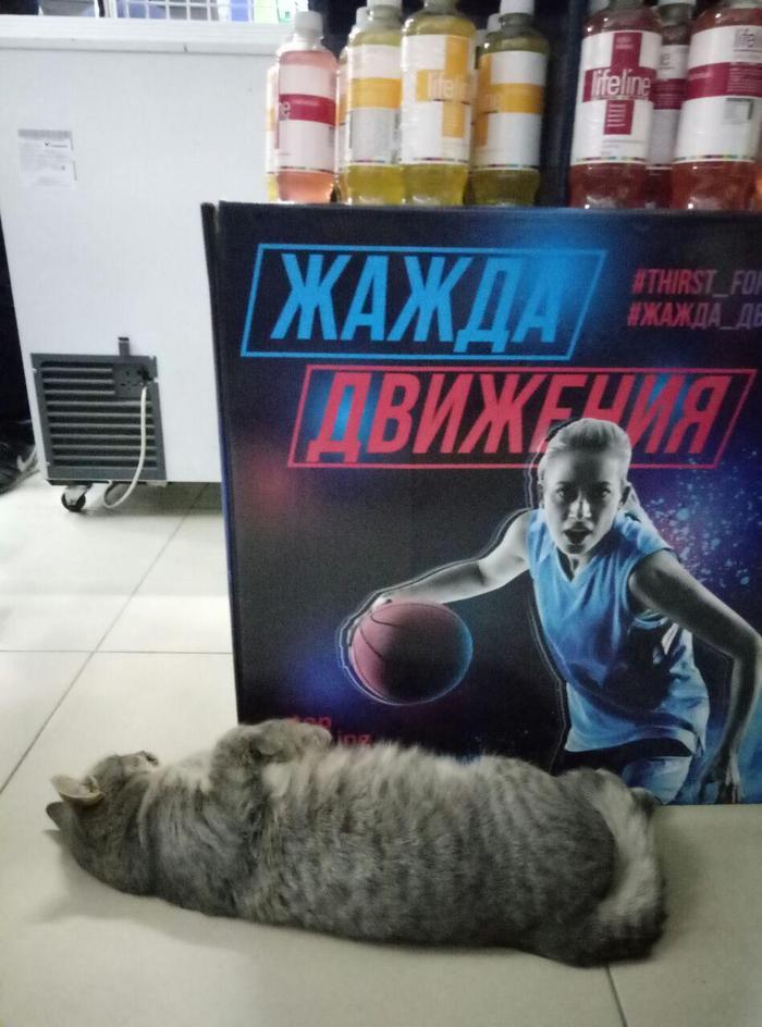 ЖАЖДА ДВИЖЕНИЯ Кот, Спорт, Энергетик