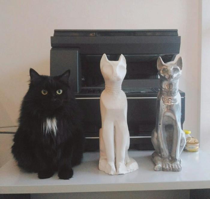 Семейство кошачьих. Семейство кошачьих, Офис, Животные, Кот