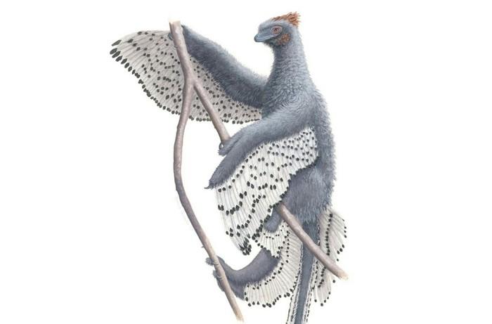Пернатые динозавры юрского периода были свирепыми и… пушистыми? Палеонтология, Перевод, Статья, Палеоновости, Юрский период, Доисторические животные, Длиннопост