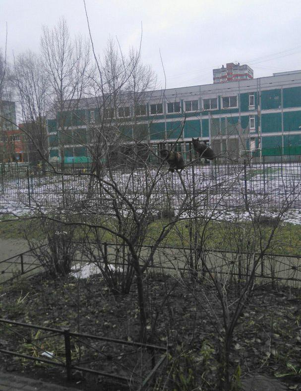 В Питер на зимовку прилетели коты Санкт-Петербург, Кот, Птицы, Длиннопост