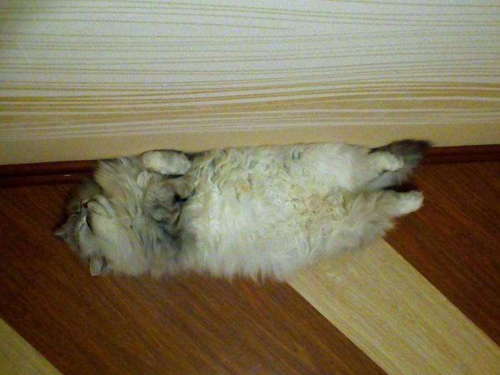 Зима....Спячка.... Кошка мое спячка, Кот