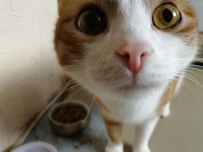 Василек Толстый кот рыжий кот, Поел, Кот