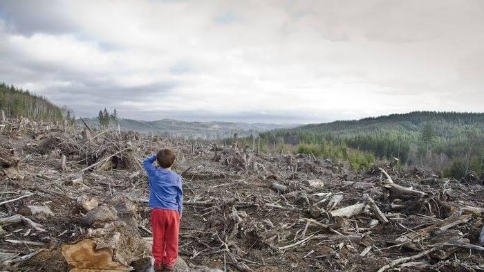 Об уничтожении лесов Сибири Сибирь, Лес, Китайцы, Вырубка, Вырубка лесов, Вырубка деревьев, Видео, Длиннопост