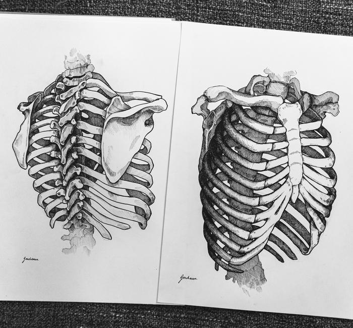 Анатомия Академический рисунок, Рисунок, Кости, Анатомия, Руки, Длиннопост