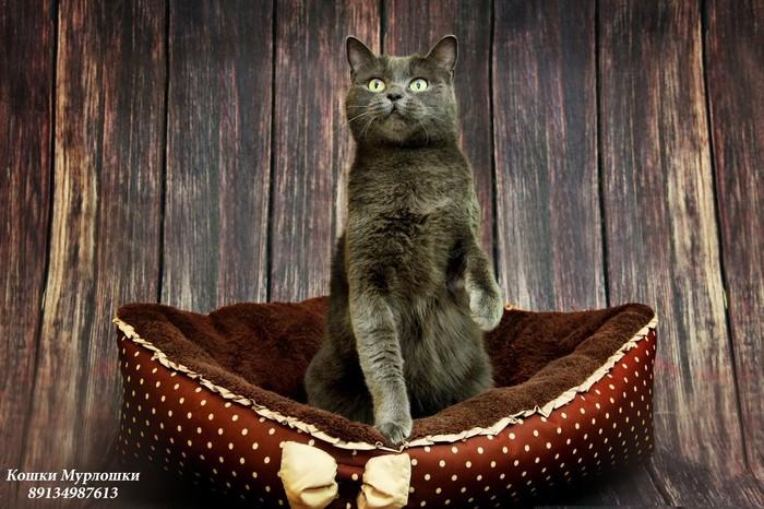 Кошки Мурлошки Кот, Волонтеры, Волонтерство, Котомафия, Приют, Приют для животных, В добрые руки, Норильск, Длиннопост