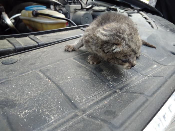 Спас кота не мое, кот, спасение животных, длиннопост