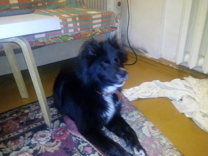 утратил право взять собаку в томске