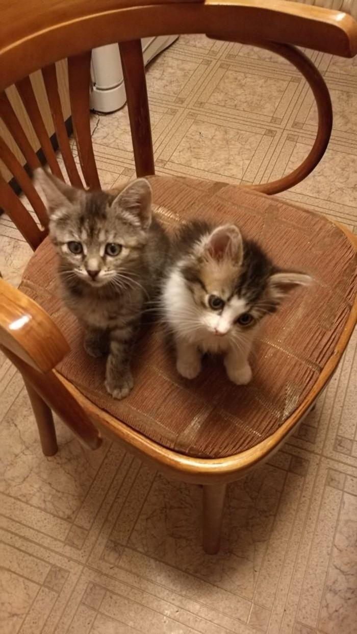 Хеппи Энд или история о том, как у нас 2 Тамбовские волчицы появились. длиннопост, моё, спасение животных, котомафия, Кот