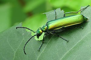 Любители секса с насекомыми