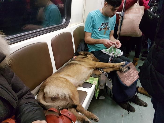 Попрошайка в метро Попрошайки, Метро, Слепо, Собака