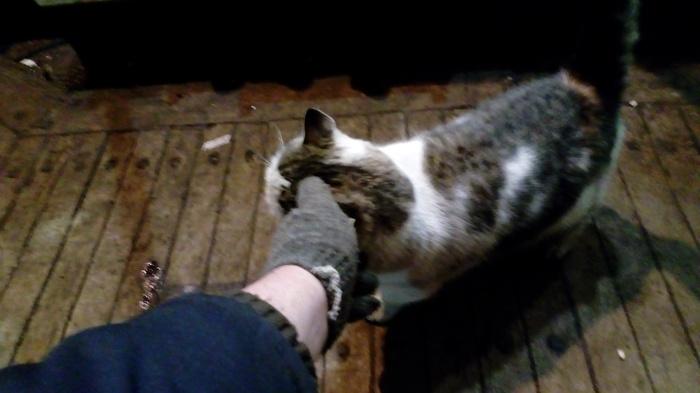 Кот мореход кот, работа, море, длиннопост
