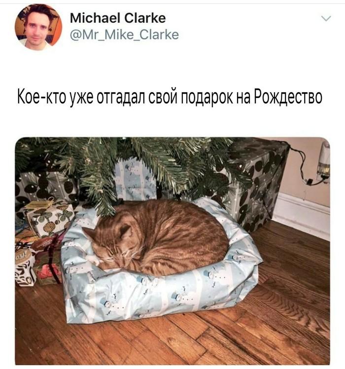 Кота не проведешь