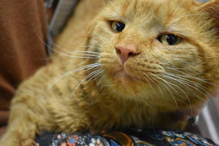 Кот пришёл за помощью к людям кот, спасение, длиннопост