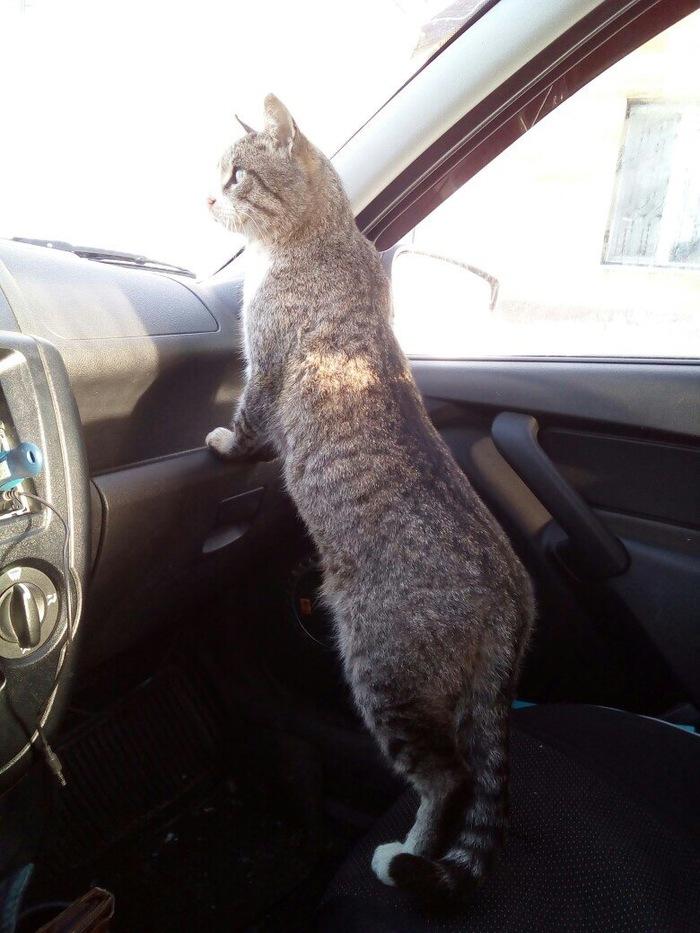 Куда поедем? Кот, Машина, Котомафия, Длиннопост