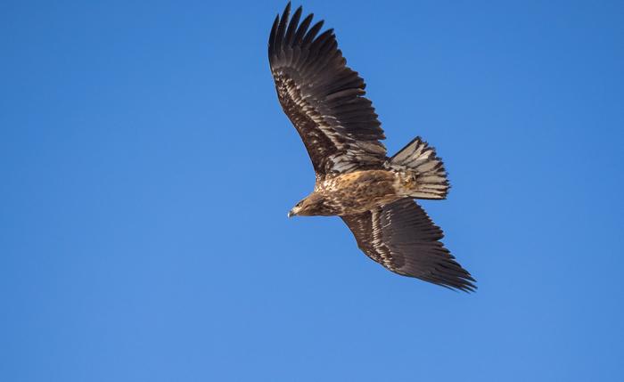 Птицы возле дома Орлан, Канюк, Сова, Хищные птицы, Длиннопост