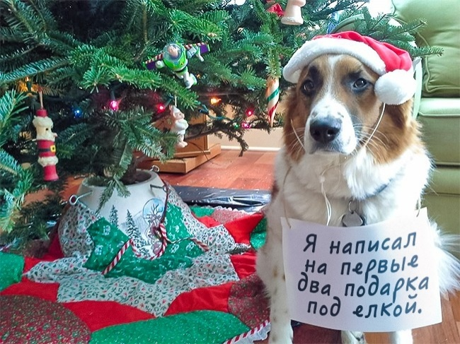 Когда ты не такой уж и хороший мальчик Фотография, Новый Год, Собака, Продам гараж