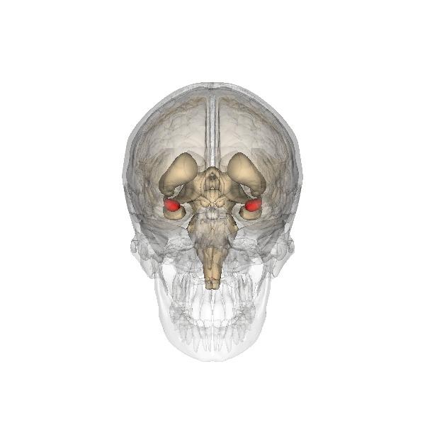 Ваш мозг - это мозгксенофоба и страха Мозг, Психиатрия, Наука, Нейропсихология, Исследования, Страх, Эмоции, Гифка, Длиннопост