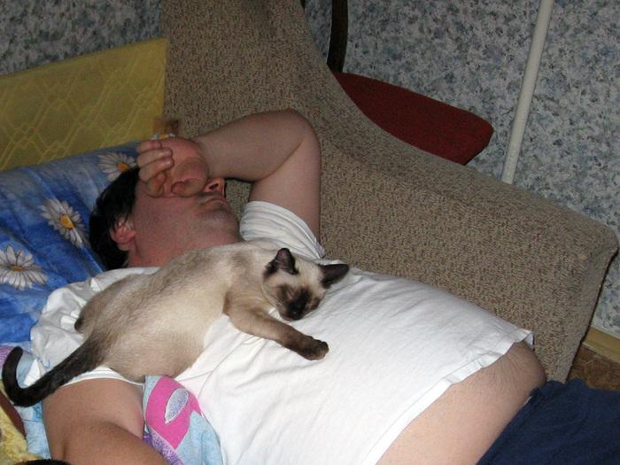 Спят усталые... все. Кот, Котомафия, Фотография, Спят, Длиннопост