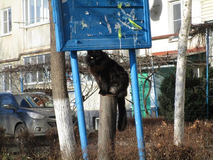 Зловещий котяра Кот, Фотография, Цитаты, Эдгар Алан по