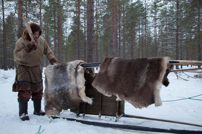 В гостях у оленеводов Оленевод, В гостях у оленеводов, Северные олени, Длиннопост