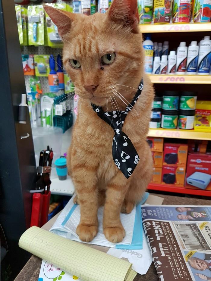 Модный приговор. Кот, Модник, Фотография, Длиннопост