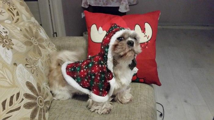 Символ наступающего года ) Новый год, Собака, Символ