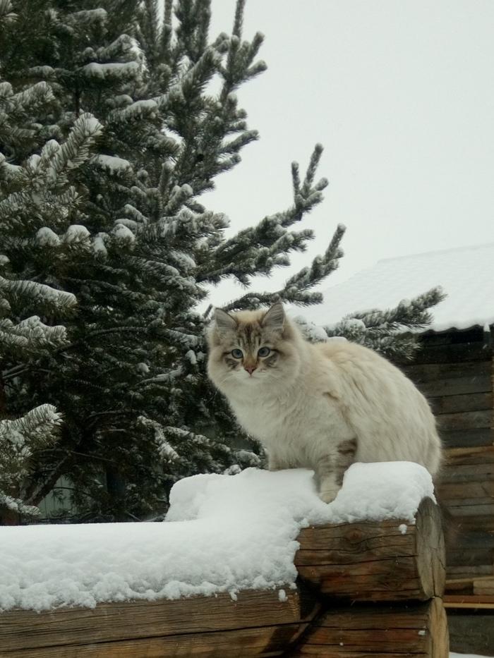Новогодний котик Кот, Снег, Кот в снегу, Длиннопост