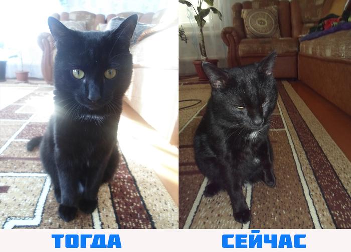 Возвращение блудного кота спустя 9 месяцев - [Предновогоднее чудо!] Предновогоднее чудо, Кот, Маркиз, Вернулся, Спустя, 9 месяцев, Чудеса света, Радость, Длиннопост