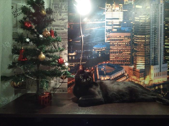 С новым годом))) Кот, Ёлка, Новый Год
