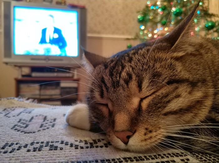 Хватану ль плюсцов? Спящая кошка, Новый Год, Длиннопост, Кот