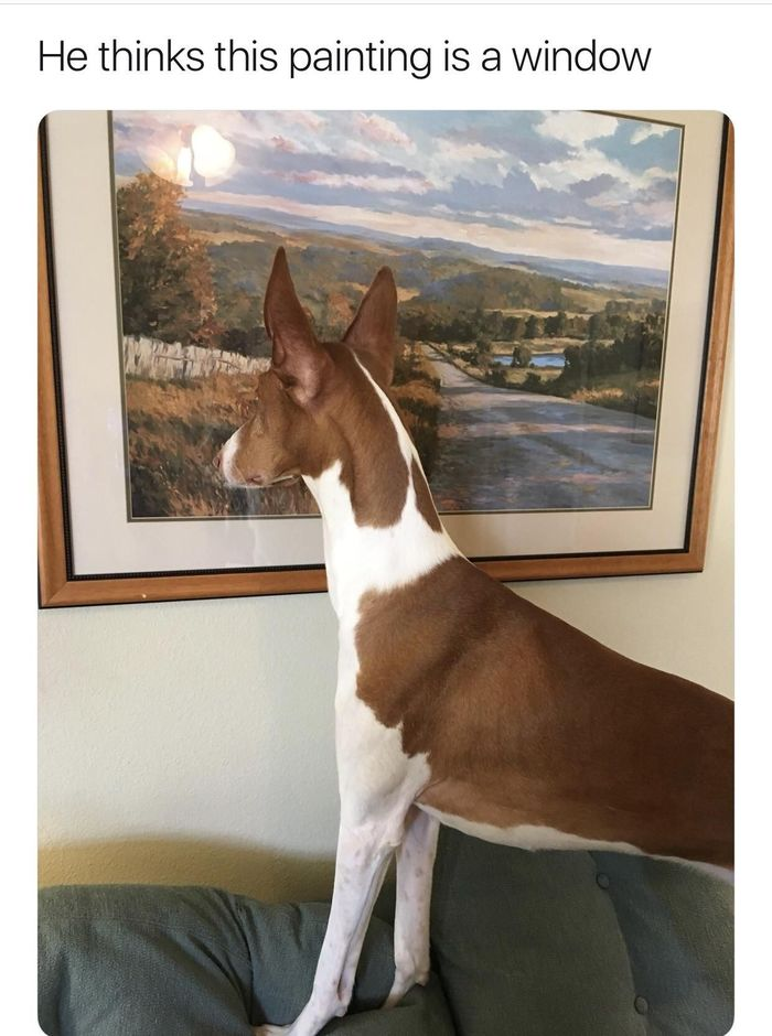 Перепутал Собака, Животные, Картина