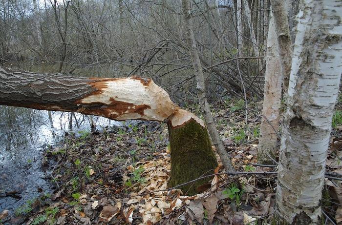 Поехали за грибами, а нашли следы применения неведомого по мощности оружия. drive2, не мое, оффроуд, путешествия, Сталкинг, длиннопост