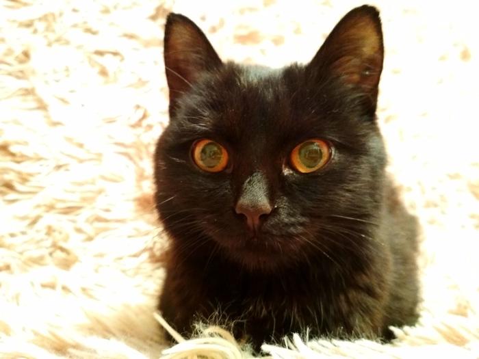 Черная кошечка ищет дом! ОМСК! Кот, Омск, Черная, Помощь, Пристройство, Фотография, Картинки, Длиннопост
