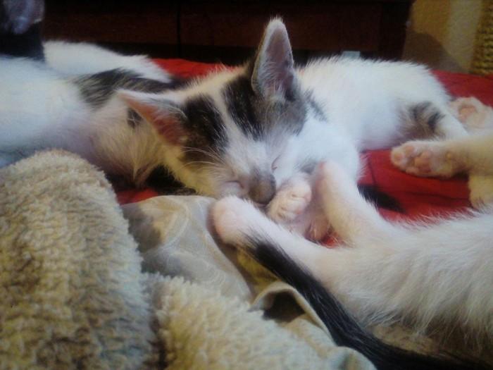 Рождественские коты или помогите пристроить! Кот, В добрые руки, Помощь животным, Длиннопост, Беларусь, Солигорск