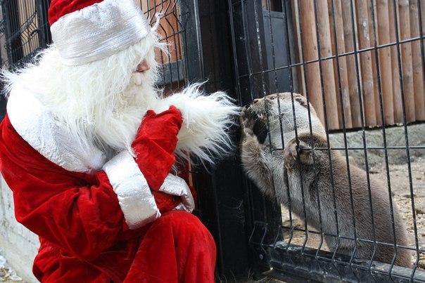 Я ЖЕ ПРОСИЛ САМКУ!!1 Челябинский зоопарк, Выдра, Новый Год, Фотография