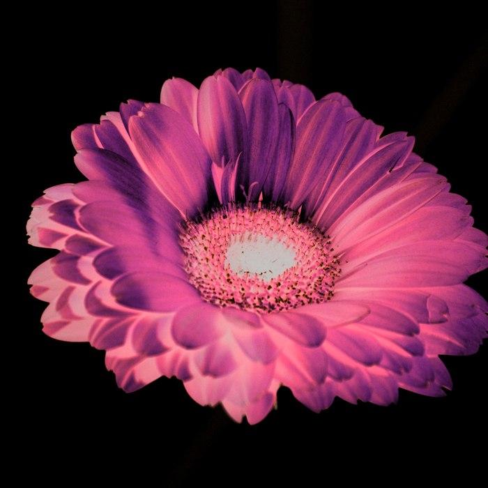 Неон. Лига фотографов, Цветы, Моё, Природа, Растения