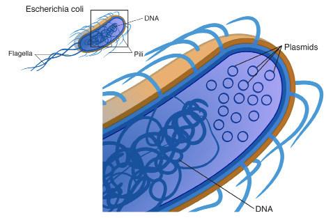 Как учатся бактерии Биология, Днк, Как это работает, Генетика, Бактерии, Антибиотики, Болезнь, Длиннопост