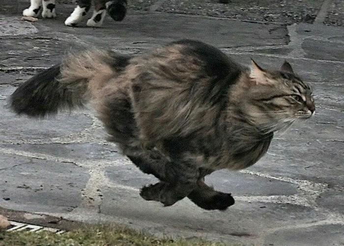 А говорят, кошки глупые животные... Кот, Клизма, Длиннопост