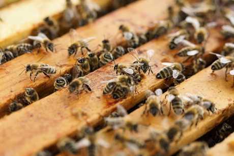 ООН утвердило Всемирный день пчеловода agronews, праздники, пчелы, пчеловодство, ООН, День