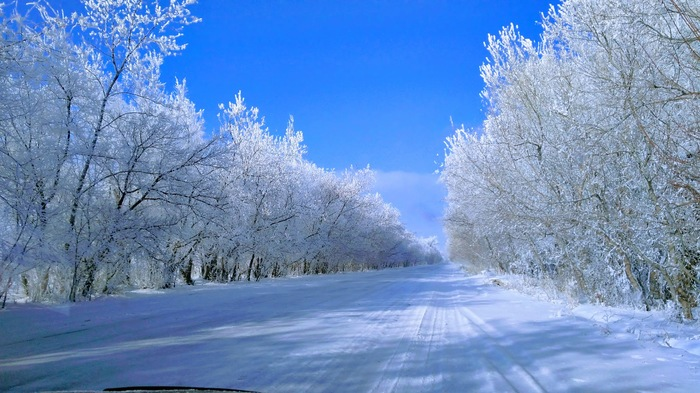 После Нового года. Казахстан, Алматинская область. Зима, Фотография